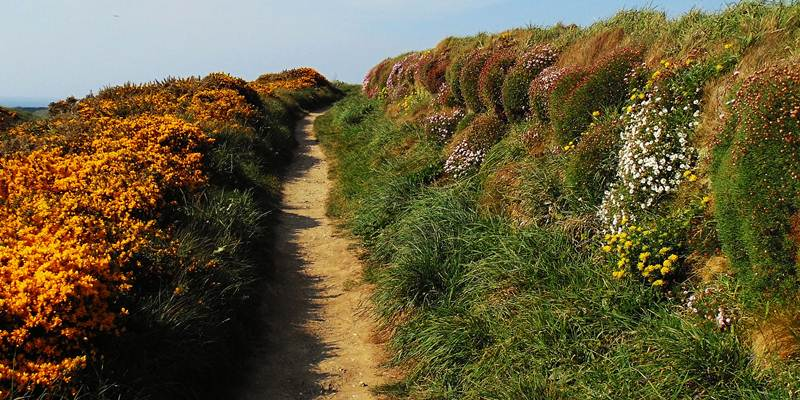 alleine-wandern-south-west-coast-path
